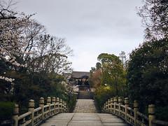 CF032208 (sephchiu1) Tags: one kyoto 京都 sakura phase 櫻花 iq250