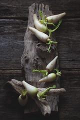 Baby Daikon Radish (Ira Rodrigues) Tags: stilllife canon raw vegetable radish styling darkbackdrop irarodrigues