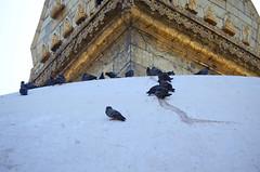 Pigeons on Stupa (Jgunns91) Tags: travel nepal travelling religious temple nikon asia peace buddhism wanderlust explore discover natgeo swayumbhunath