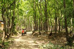 Going inside forest (Kaniz Khan 2009) Tags: road park trees green forest nationalpark curved bangladesh gazipur salforest bhawalnationalpark salbon