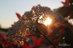Rveil de la nature (Emilie C. Photographie) Tags: soleil crpuscule matin