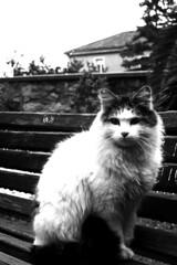 _MG_1861 (Anyon through the Rain) Tags: blackandwhite cat bench lamezia terme