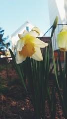 Spring (zubus40) Tags: spring blumen flovers bahar cicekler