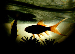 fish pez ford silhouette mobile backlight contraluz... (Photo: Aviones Plateados on Flickr)