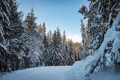 Snowshoeing at Trillium Lake (ZnE's Dad) Tags: snow oregon trilliumlake