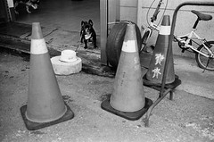 Leica_m_BW_5720_M35F14A_dog (OPTIK AXIS) Tags: camera leica blackandwhite film taiwan monochromatic 135  asph  rf leicacamera   blackandwhitefilm  summiluxm   ilfordpan400    analoguephotography  mp85  m summiluxm11435asphe46 garylevel