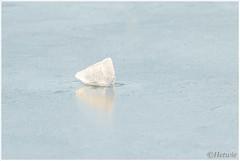 vast in het ijs (HP002069) (Hetwie) Tags: winter nature water nederland natuur icecube vijver noordbrabant ijsblokje helmond wijkpark brouwhuis