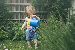 Day 182 (~ Maria ~) Tags: flowers fence toddler lawn emma july shorts watercan day182 2015 16monthsold mariakallin 365project nikond800 wateringinthegarden