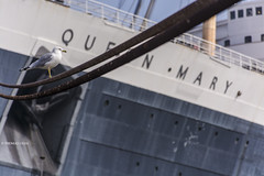Queen Seagull (tom ueda) Tags: world california usa art animal animals architecture composition america photography us photo movement nikon flickr cityscape unitedstates seagull unitedstatesofamerica ngc wideangle pointofview queenmary longbeach moment nationalgeographic d7100