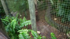 Sam 3970-9 (Michael Supinski) Tags: florida alligator baldeagle deer turaco jaguar bobcat lorikeets sandhill cassowary warthog hyacinthmacaw bluemacaw brevardzoo cockiel