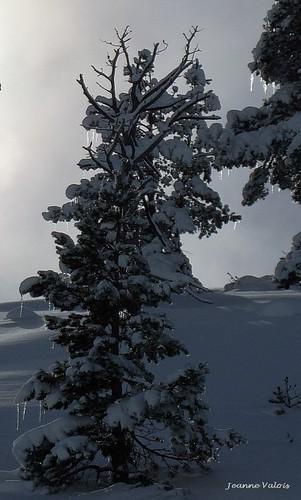 De neige et de lumière
