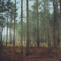(RoosterBooster75) Tags: morning trees fairytale woodland run hampshire wanderlust iphone fleetpond mobilephotography pyestock iphoneography iphoneonly mextures