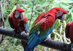 (Ana Bianchini) Tags: naturaleza nature animals zoo day colours natural dia colores animales bioparque temaiken zologico