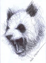 panda a lapicero (ivanutrera) Tags: bear animal pen oso sketch panda drawing draw dibujo ilustracion lapicero boligrafo dibujoalapicero dibujoenboligrafo