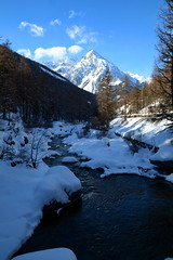 FEM_3239m (MILESI FEDERICO) Tags: wild italy nature nikon europa europe italia nat natura piemonte dettagli tamron alpi piedmont valsusa milesi alpicozie valledisusa d7100 visitpiedmont altavallesusa altavaldisusa valliolimpiche nikond7100 milesifederico