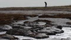 Fossil hunt (jump for joy2010) Tags: uk england people wet landscape coast march sand mud hunting somerset greyday 2016 inthezone coastbeaches steart stert mudbanks devilstoenail bridgwaterbay fossilhunt searchingforfossils mynorm