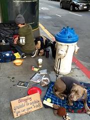 struggling (vhines200) Tags: sanfrancisco dog sign homeless 88 panhandler 2016