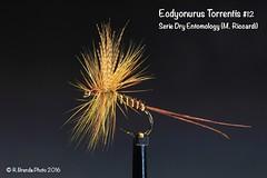Ecdyonurus Torrentis (Roberto PE) Tags: flyfishing flytying