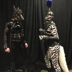 Two Ponies - 2 (AgentDrow) Tags: black sexy tail bondage bdsm pony zebra latex corset pvc zentai ponyplay