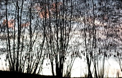 wassermusik (lux/us) Tags: light sea abstract tree water reflections licht wasser angle availablelight sony wolken form reflexion schatten spiegelung baum lair effekt abstrakt erscheinung