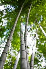 Towers in Kameyama-koen (Chase Hoffman) Tags: color nature forest landscape fuji dof grove bokeh bamboo depthoffield r fujifilm fujinon f12 xf 56mm kameyama kameyamakoen chasehoffman chasehoffmanphotography fujifilmxt10