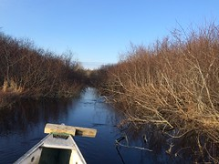 YV-22032016-simple-JR-7 (Jonathan Riverwalker) Tags: stream brook baboon stillwater canoeing february bog macdonald yrp paddler alders yearround
