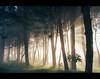 thousandLight (r_if) Tags: wood light sun sunshine ep1 olympusep1