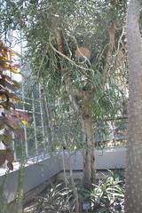 IMG_2456 (Mercar) Tags: canada garden botanical montreal jardin greenhouse botanic botaanikaaed qubeck