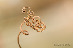 Twist (Jamarem) Tags: flower dead twist 100mm twirl passion macromondays canoneos70d