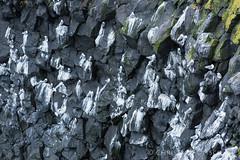 Island | Anarstapi (chr.ditsch) Tags: winter sea seagulls birds island is iceland meer wasser surf natur landschaft moewen voegel qf brandung querformat vesturland coastkueste