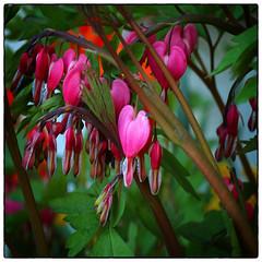 OM Zuiko Flowers (Krogen) Tags: flowers norway norge norwegen akershus blomster romerike krogen ullensaker jessheim olympuse400 omzuikolens