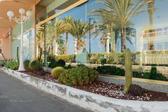 Hotel Cleopatra, Tenerife (Roman Dergunov) Tags: cactus reflection tree window palm tenerife lantern canonef1740mmf4lusm 2014       canoneos70d