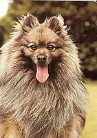 mittelspitz2 (tora_fin) Tags: dog postcard trade