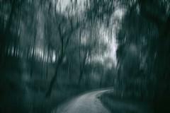 Wald 3 (Radek Lokos Fotografie) Tags: forest canon eos mono reisen outdoor freiburg holz landschaft wald bume baum 6d radeklokosfotografie