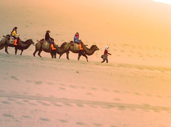 Desert Walk (marcopastore) Tags: world china new travel sky panorama orange nature beautiful landscape sand view place ride desert earth walk natur places inner explore camel stunning oriental exploration gobi discover landscaper