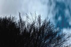 good vibrations (P. Marion) Tags: color tree nature stain clouds landscape nikon paint raw glow tint peinture ciel saturation coloring dye pm nuages paysage hue arbre couleur pigment ton intensity chroma coloration abstrait tincture luminosity colorant brillant clat teinture pigmentation marione teint d810 teinte
