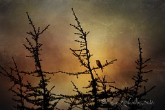 nobody owns tomorrow (ggcphoto) Tags: tree texture sunrise tomorrow bluetit