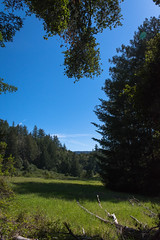 Meadow (Reptilian_Sandwich) Tags: blue trees wild sky mountains green nature grass leaves forest landscape outdoors outdoor hiking branches meadow fir afternoonlight
