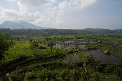 Rice Terraces (Byron Taylor) Tags: bali canon indonesia landscape asia southeastasia rice terrace riceterrace canon7d