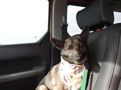 Passenger (ptcruiser4dogs) Tags: dog lake woody servicedog pinewood