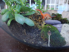 Terrrio (jana_geo2004) Tags: naturaleza nature mushroom natureza fungi fungus cogumelo fungo dinossaur dinossauro terrrio