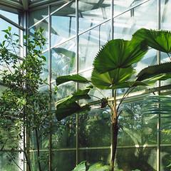 68 (philipp.) Tags: plants frankfurt botanicalgarden palmengarten 1x1 ffm selp18105g