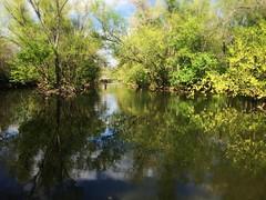 North Fork of the Elkhorn Creek in Scott County, Kentucky (animal vegetable miracle) Tags: kentucky flyfishing smallstreamfishing historyofkentucky kentuckywaterways flyfishingkentucky