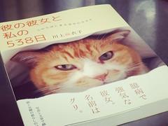 読了♪ 猫好きには堪らない一冊(>_<)  #本 #読了 #猫 #川上麻衣子 #彼の彼女と私の538日