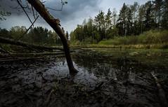 Teichufer (Stephanie Mnner Photography) Tags: nature landscape wasser outdoor natur ufer teich landschaft regen wetter