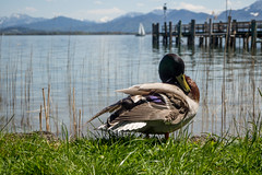 Fraueninsel-008 (andreas.breu1) Tags: boot see stand wasser ente sonne schiff chiemsee chiemgau