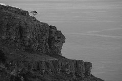 Lonesome Tree (Tomas Pfeifer) Tags: sea italy cliff tree landscape sicily erice lonesome