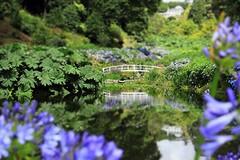 Trebah Garden | Tilt-shift (Mike.Dales) Tags: gardens cornwall tiltshift trebah canon600d lumiacreativestudio