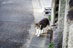 Today's Cat@2016-04-30 (masatsu) Tags: cat pentax catspotting mx1 thebiggestgroupwithonlycats