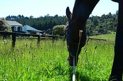 horsey (elisewatson) Tags: flowers summer horse field